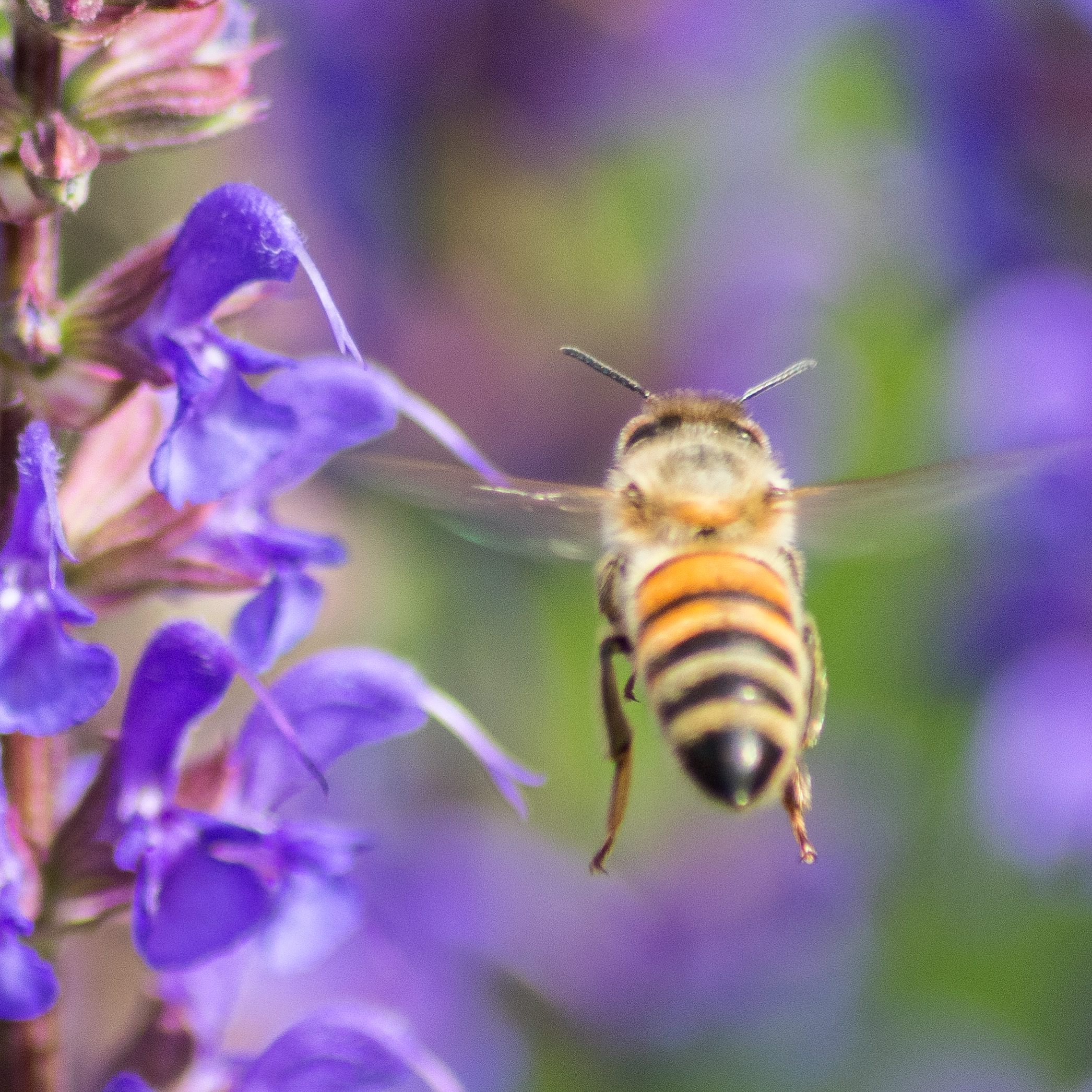 Bienenfreundliche Pflanze